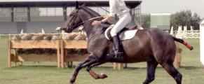 Sport / L'équitation, un certain art de vivre!
