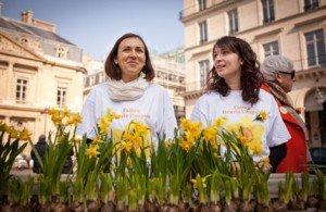 Une jonquille pour Curie : faites fleurir l'espoir contre le cancer !   dans Bons Plans une-nl-jonquilles-300x195