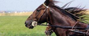 Ourasi : le retour d'une icône à Vincennes