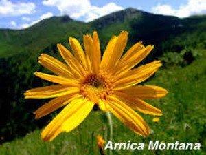 SPORT ET HOMÉOPATHIE SANTÉ rnica-montana